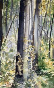 """Rainforest, Tofino B.C. 10.5"""" x 16.5"""" - Watercolour - Sold"""